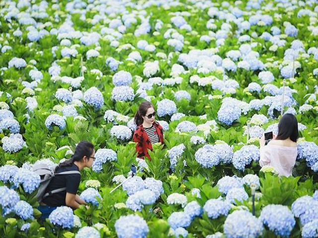 Tour tham quan sở thú Zoodoo Đà Lạt – Vườn hoa cẩm tú cầu