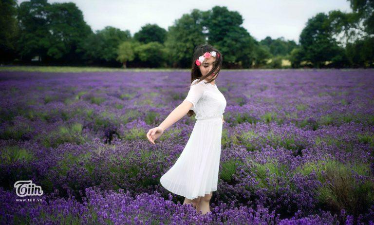 Cánh đồng hoa lavender Đà Lạt nở vào tháng mấy