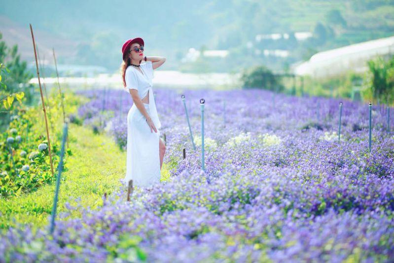 cafe view đẹp Đà Lạt F cánh đồng hoa