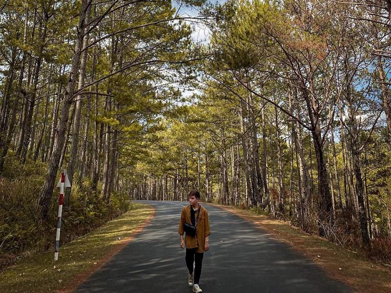khung cảnh rừng thông ở Đà Lạt