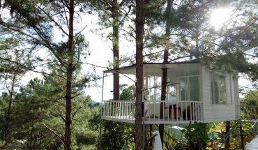 homestay pine hill