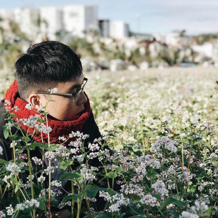 vườn hoa tam giác mạch ở Đà Lạt