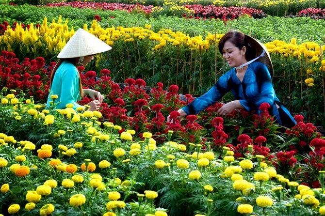 chăm sóc làng hoa vạn thành