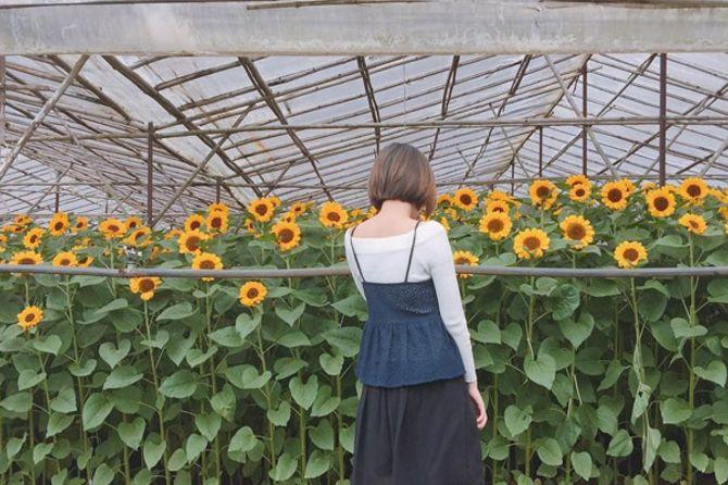 hoa hướng dương ở làng hoa