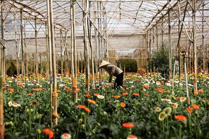 làm vườn ở làng hoa