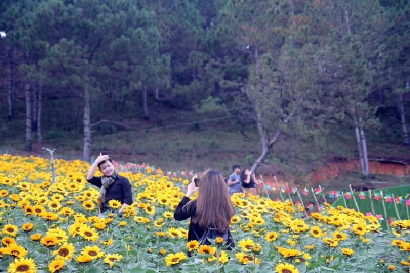 làng hoa ở Đà Lạt