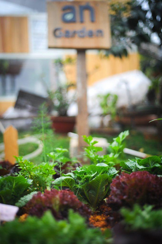 vườn rau ở an cafe
