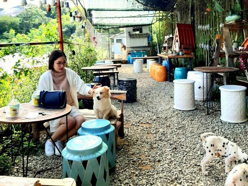 quán cà phê thú cưng Đà Lạt