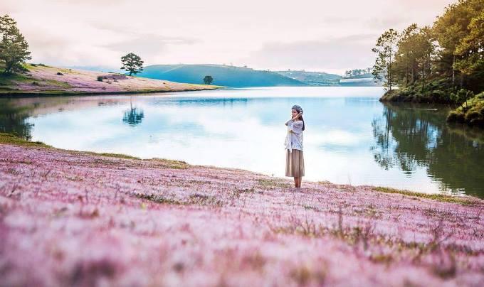 mùa cỏ  hồng ở Đà Lạt